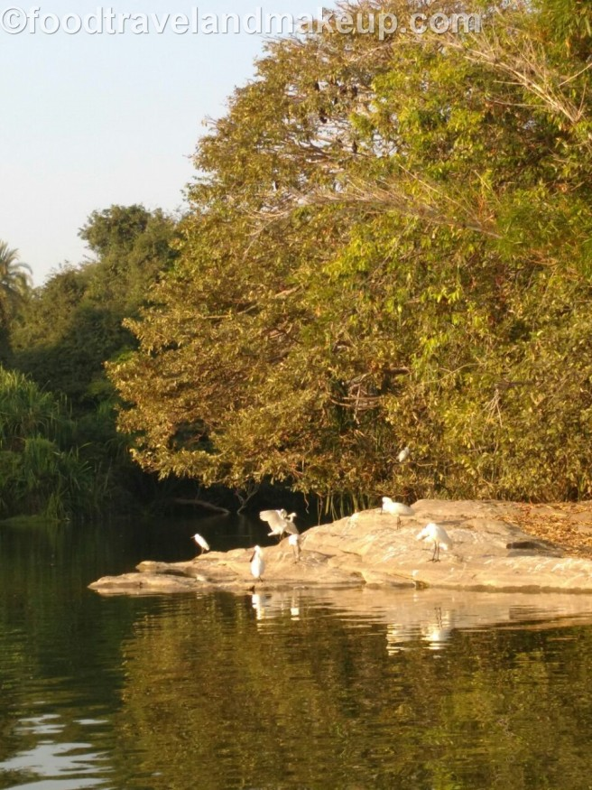 mysuru bird sanctuary @ftm (15)