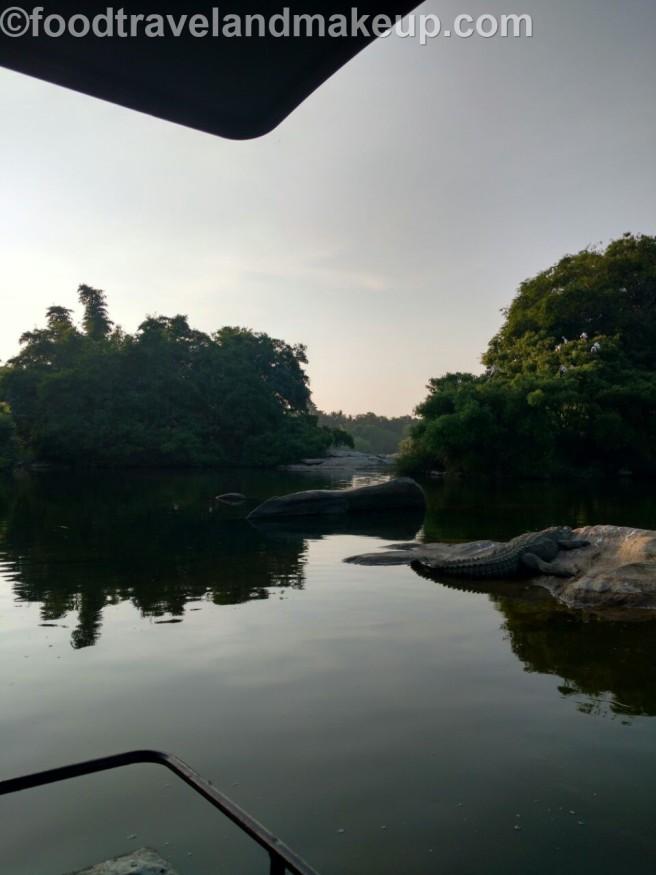 mysuru bird sanctuary @ftm (4)