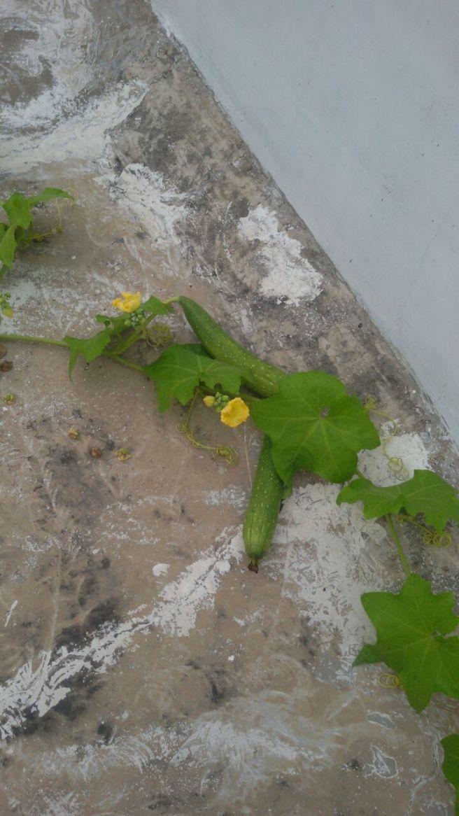 FoodTravelandMakeup Beyond FTM My Harvest (4)